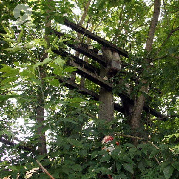 Старый телеграфный столб